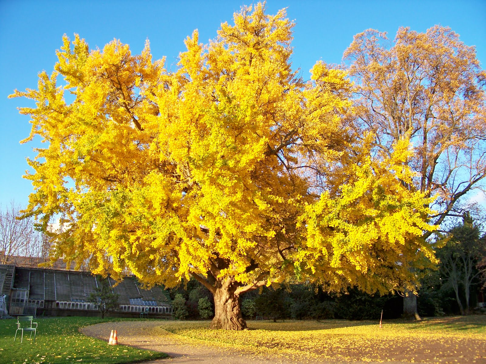 4.arbre-aux-40-écus